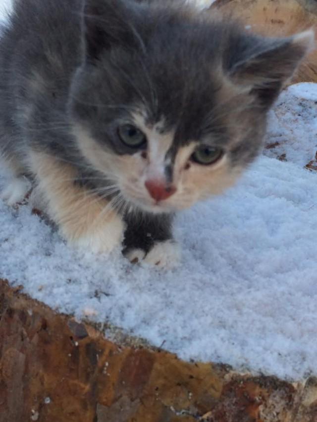 [Иркутск] Крошечный котенок замерзает в куче дров