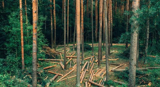 Норвегия - первая страна мира, отказавшаяся от вырубки лесов