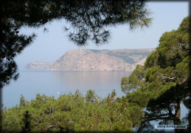Крым. Мыс Ая. Деревья моря.