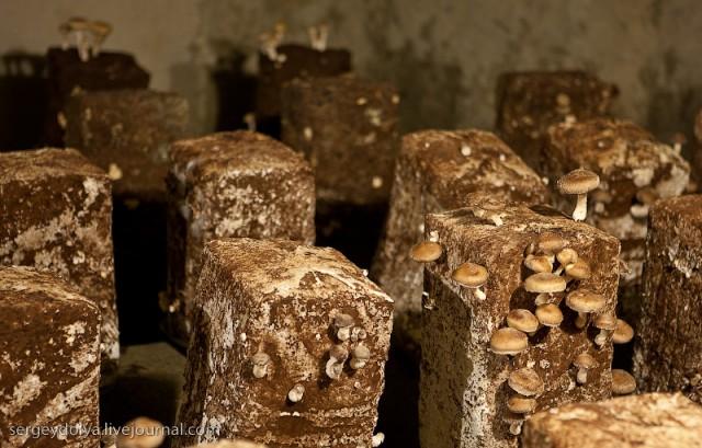 Ресторан в Пещерах Троглодитов и подземные грибы