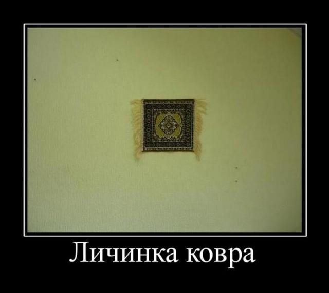 Картинки в черных рамках с подписями