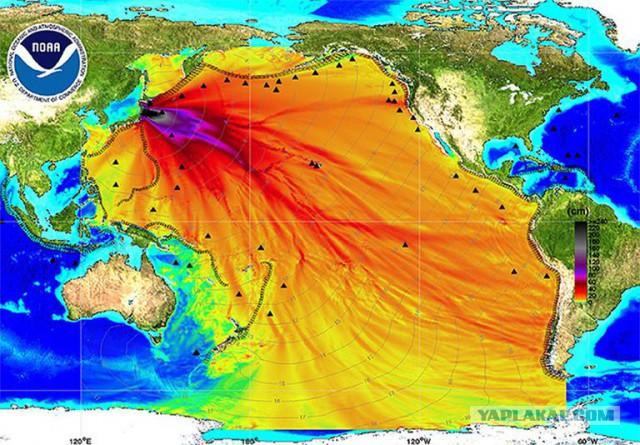 Фукусима отравила весь Тихий океан но вокруг катастрофы царит странный заговор молчания