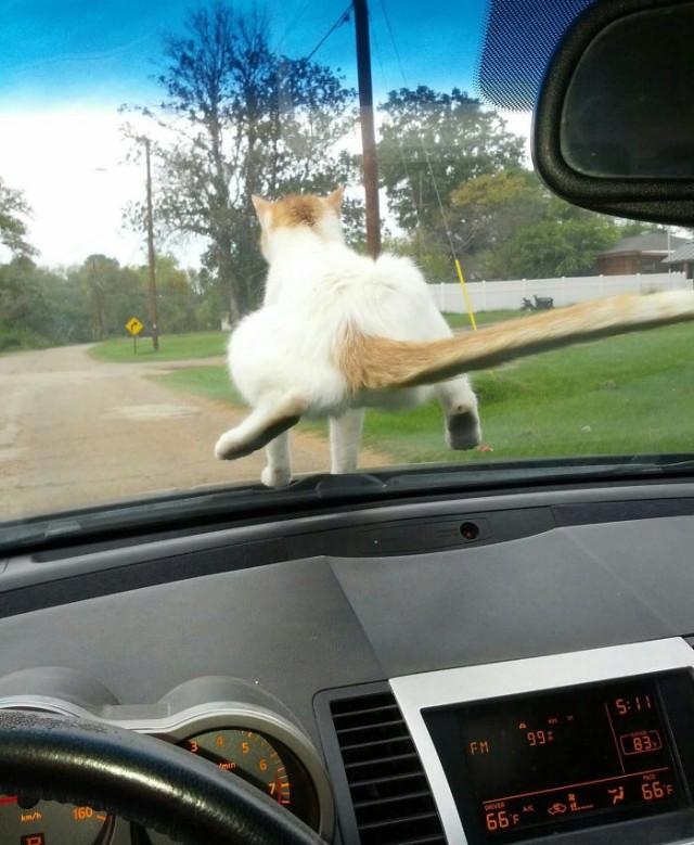 Неадекватные коты