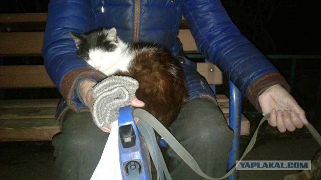 Фиона. Грустный пост о кошке в собакочетверг.