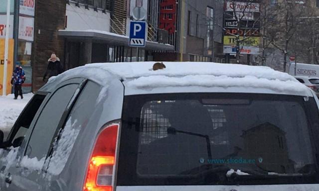 Подборка интересных и веселых картинок 11.01.19