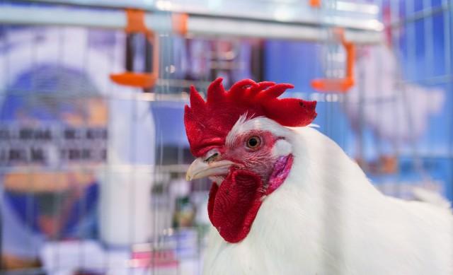 Мэр Новокузнецка заставил бизнесменов нюхать куриный помёт