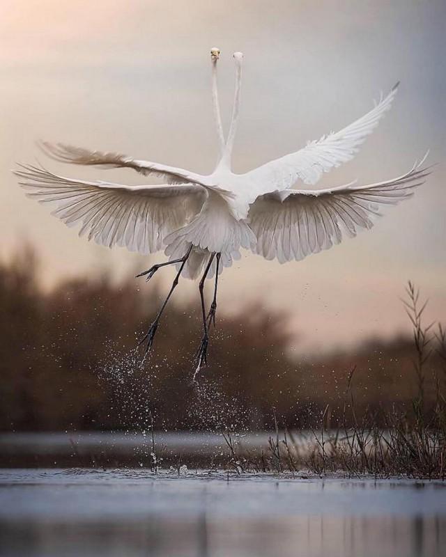 Необыкновенные и просто обыкновенные фото - Страница 8 11857088