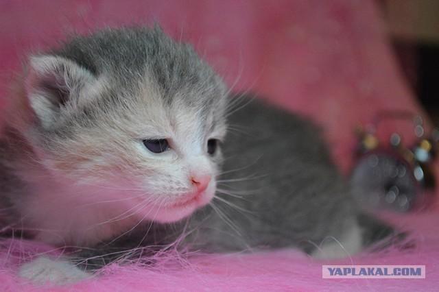 Будущие коты ищут хозяев