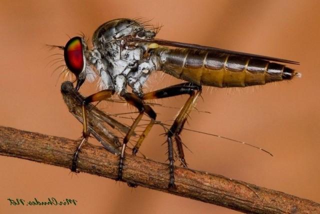 Мифы и правда о мухах