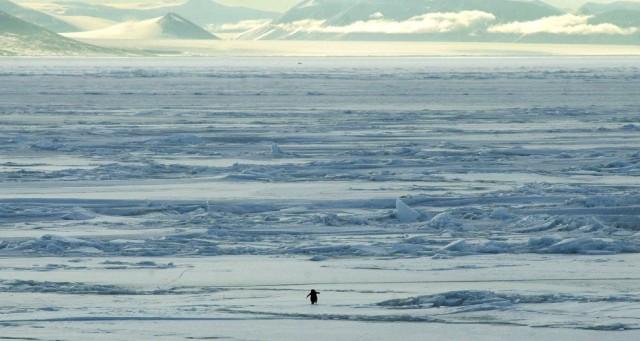 Антаркдида - она такая красивая!