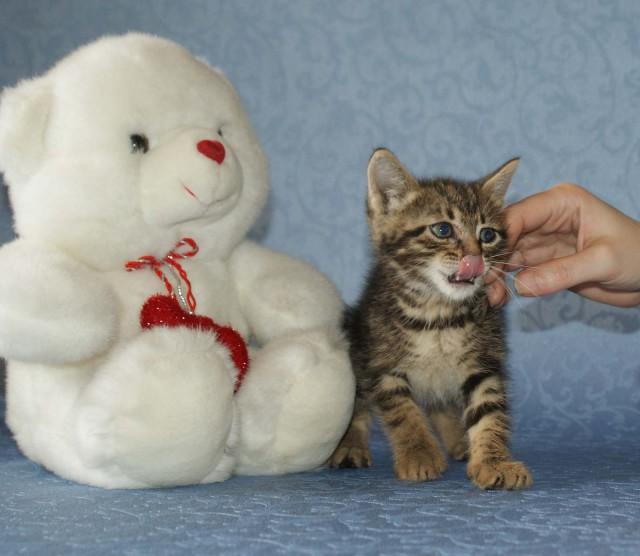 Маленький котенок срочно нуждается в доме!