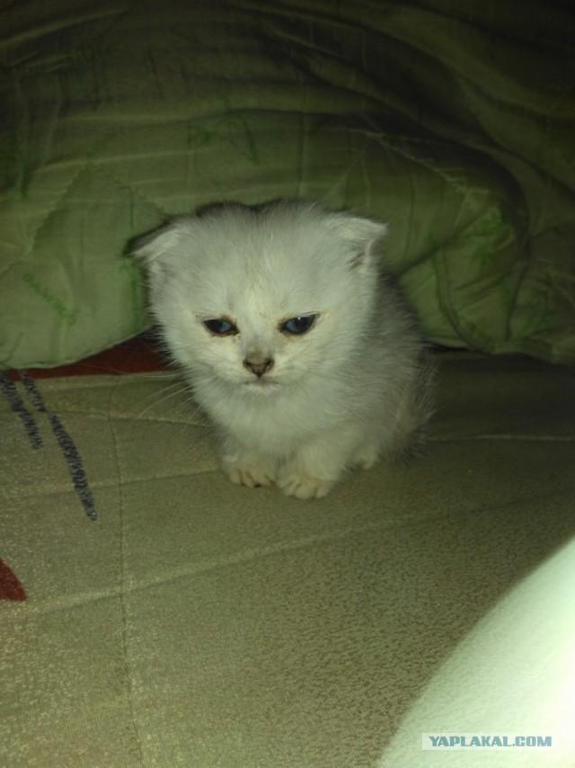 Ребяты! Срочно маленькая девочка - котенок 1.5 месяца.
