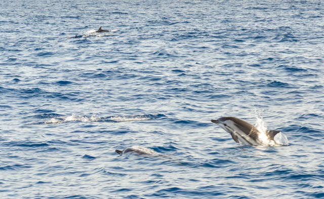 Поездка на Канарские острова