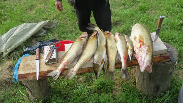 нсо колыванский район рыбалка