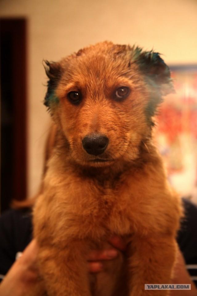 Безухий щенок