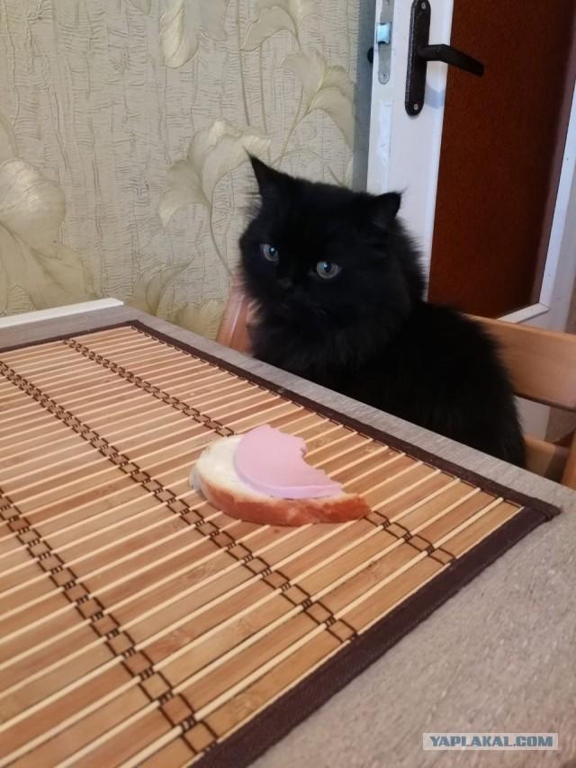 Возьмите, пожалуйста, кота!