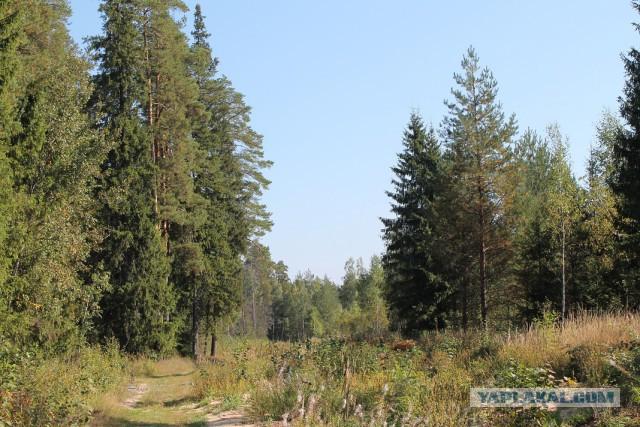 Осенний лес средней полосы