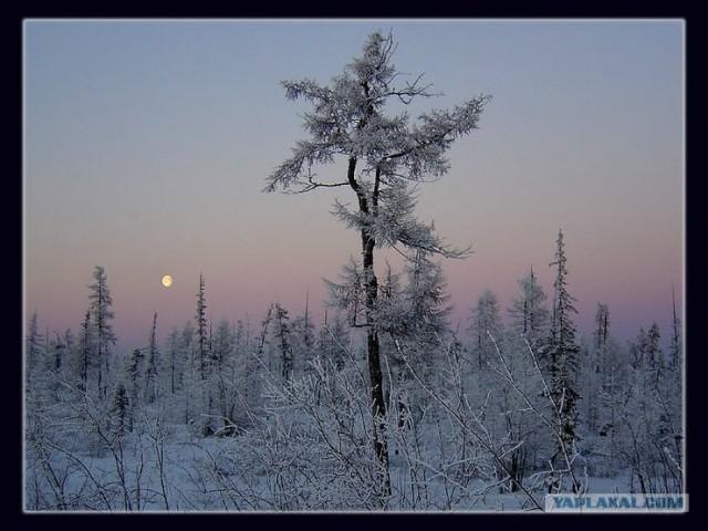 Зима пришла как никак! Красивые снежные пейзажи