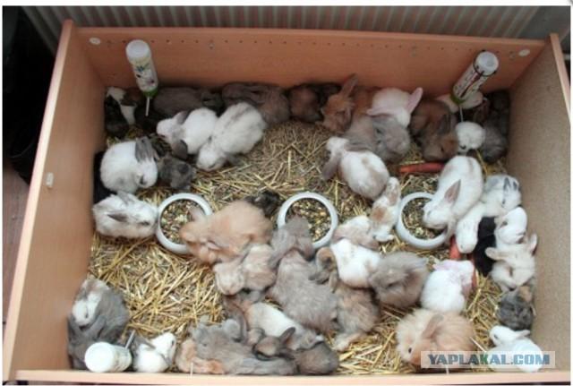 Все о кролях в домашних условиях
