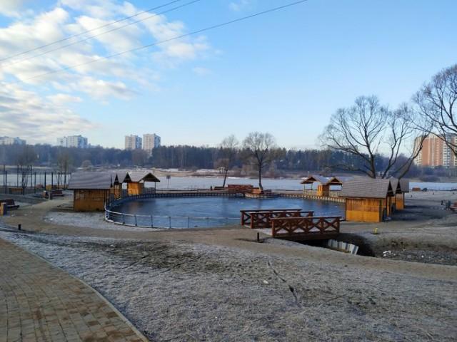 Свиньи в парке в Новой Москве