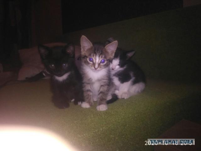 Котята ищут дом в Ижевске.