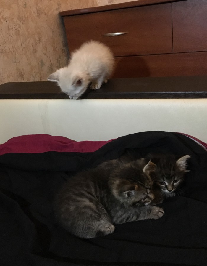 Котята в хорошие руки (Москва)