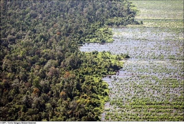 Леса продолжают исчезать с жуткой скоростью