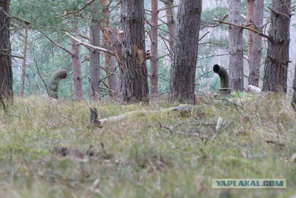 Странные трубы в лесу