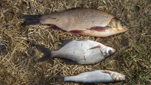 Отчет по весенней рыбалке-2017