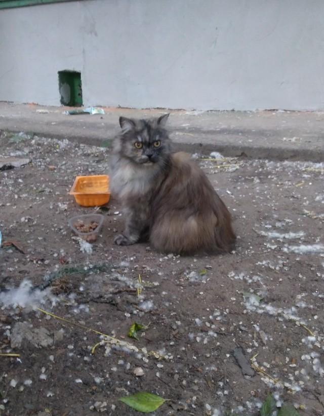 Возьмите кошку (Москва, ЗАО)