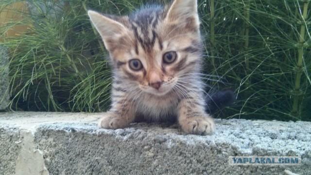 Чудесные котята ищут дом в Сочи :)