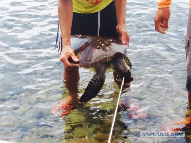 Жителю Владивостока грозит 20 лет тюрьмы за убийство черепахи на Филиппинах.