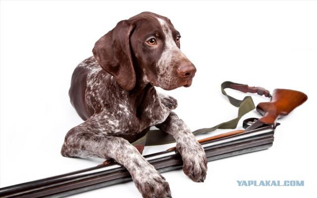 Собака застрелила Пермяка на охоте из ружья