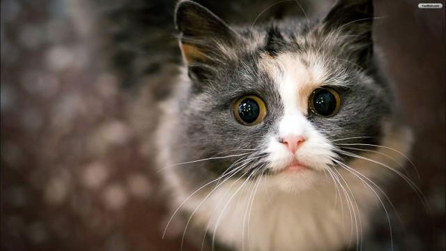 Нужна помощь в спасении кошек!