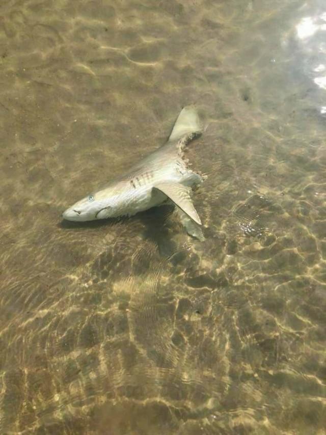 В глубине всегда найдется рыба побольше