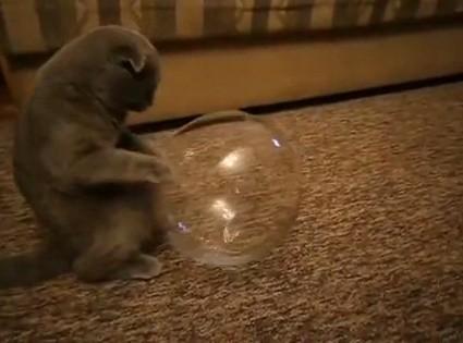 Аквариум для кота