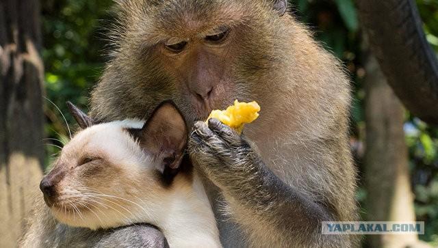 Братья их меньшие: зачем дикие животные заводят питомцев