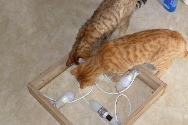 Как я с котами лампу мастерил,