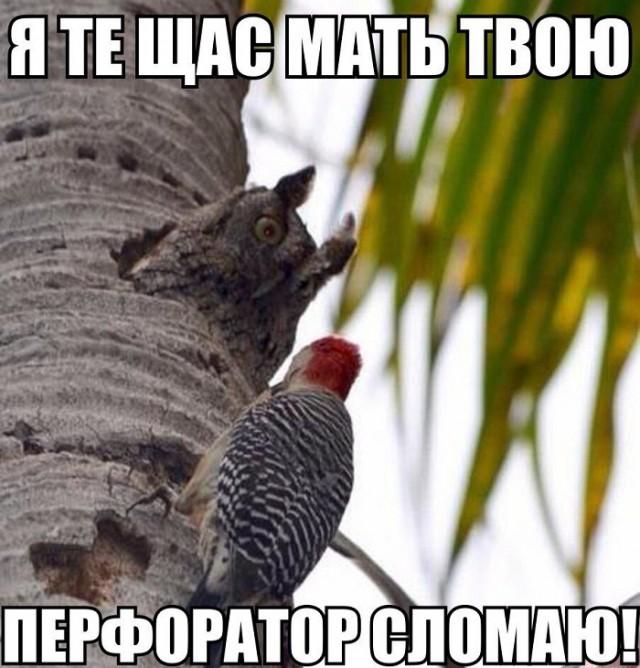 http://s00.yaplakal.com/pics/pics_preview/9/7/4/8765479.jpg