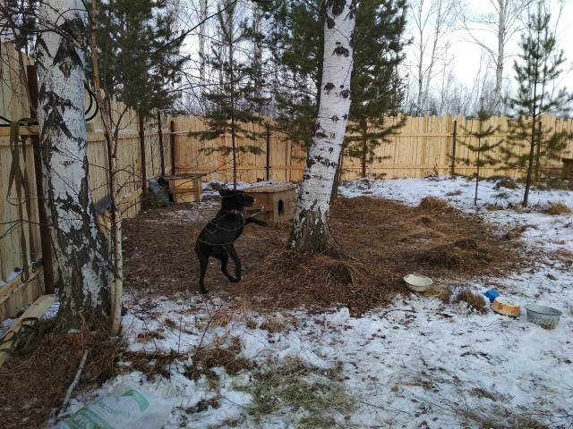 Что нужно, чтоб построить приют для собак?
