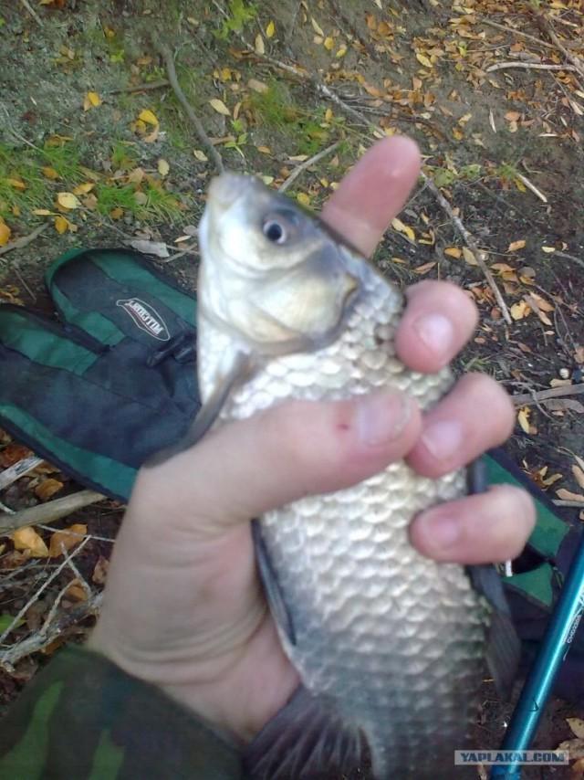 Рыбалка на ерике