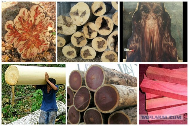 Что мы знаем о деревьях? Вот какие тайны хранит древесина