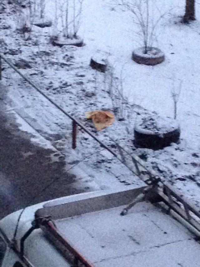 В Великом Новгороде хозяин отрезал голову гостю во время новогоднего банкета и выбросил ее на улицу