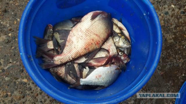 рыбалка с помощь фидера