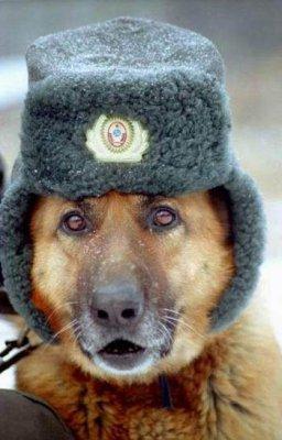 МИД РФ недоволен докладом ООН по Украине, признающим поддержку террористов Россией - Цензор.НЕТ 2746