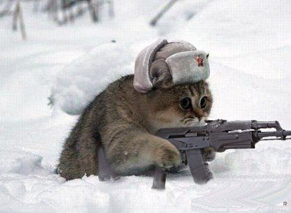 картинки кота с автоматом скачать