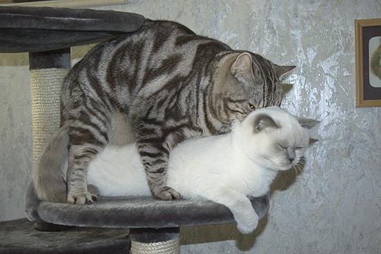 Фото коты ебутся 70856 фотография