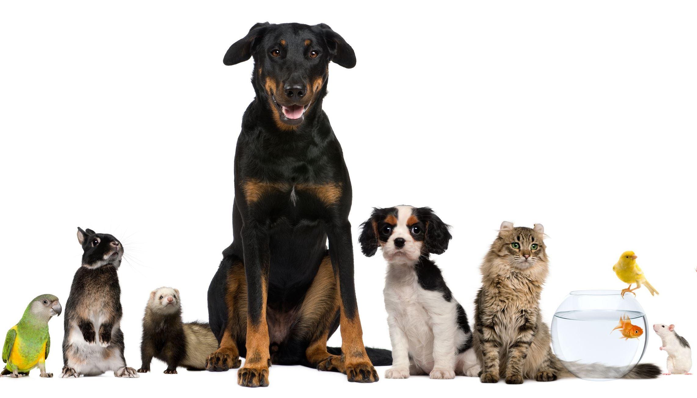 Emosurf. Com: рекомендательная сеть эмоционального контента. Дети и домашние животные: все счастливы!. (фото).