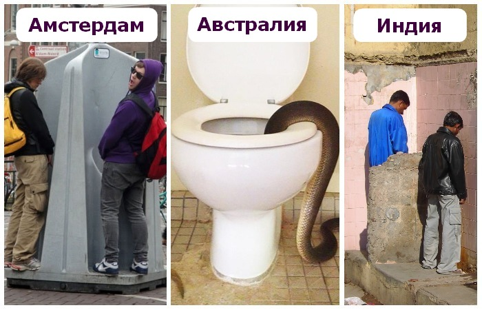 Ссут возле туалета