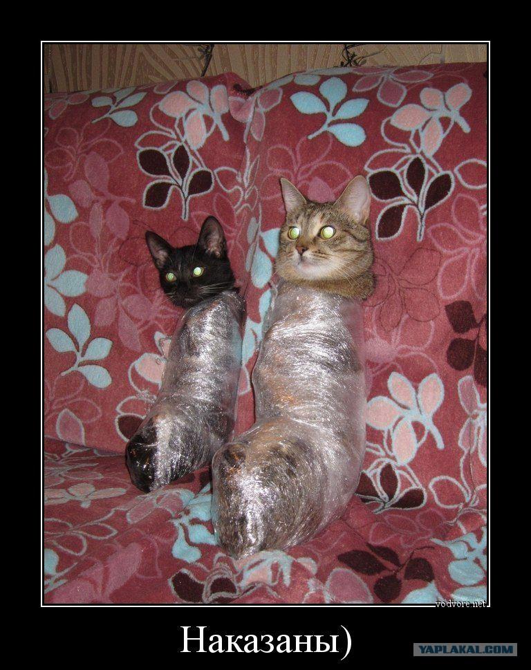 Кот целлофан